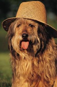 durango dog sitters